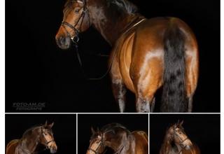 Pferde & Hunde im Studio