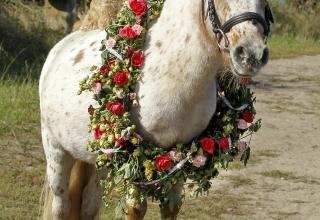 Pferde, Pferd & Mensch