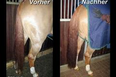 Schweifhaarverl_ngerung-Nachher